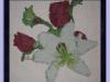 roselily